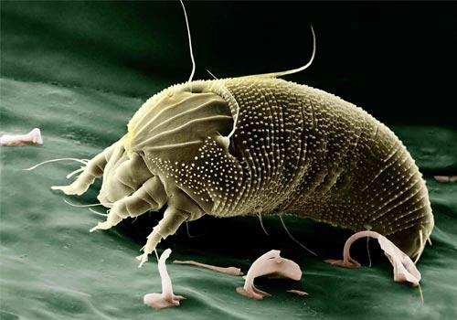 Chemische Reinigung als Lösung gegen Milben