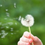 Pollenallergie nicht mit Textilreinigung Dr-Wasch